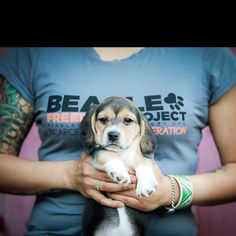 "Beagle Freedom Project..... AMAZING organization  - Saving animals from ""research"" laboratories."