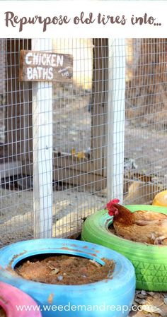Repurpose Old Tires into Chicken Baths Weed 'Em and Reap Backyard Chicken Coops, Diy Chicken Coop, Backyard Farming, Chickens Backyard, Diy Chicken Feeder, Chicken Swing, Chicken Coop Pallets, Chicken Tractors, Small Chicken Coops