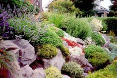 Freshening up the look of Seattle front yard rockery gardens is an effective way to quickly improve a home's curb appeal. Planting Flowers, Easy Landscaping, Landscaping Tips, Plants, Garden, Landscaping With Rocks, Rockery Garden, Landscape, Steep Hillside Landscaping