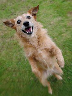 10 Unusual Tricks to Teach Your Dog