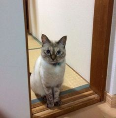Errant, un adorable chat a choisi de lui-même qui serait son humain pour la vie
