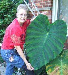 Un-Be-Leaf-ables ( making stepping stones, bird baths, etc out of leaves)