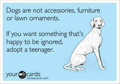 If you want something that's happy to be ignored, adopt a teenager. #rescue