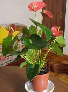 Interior Garden, Evergreen, Indoor Plants, House Plants, The Cure, Google, Gardening, Bff Quotes, Fantasy