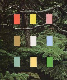 Jungle, colors, illustrations, graphic design