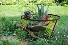 """succulent """"container"""""""