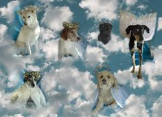 Our 2013 New Years Card...Dedicated to all the pups who brighten the lives of so many throughout the year.