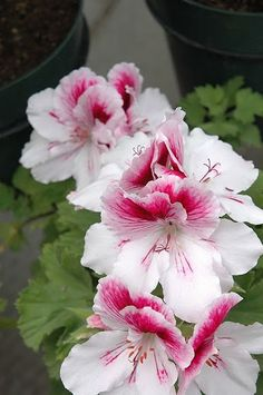 :*Flores *: - Comunidade - Google+