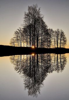 Phenomenal Reflection Pictures on Water - Top 10 Photography All Nature, Amazing Nature, Nature Tree, Pretty Pictures, Cool Photos, Macro Fotografie, Landscape Photography, Nature Photography, Amazing Photography