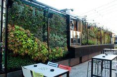 modern succulent walls - Google Search