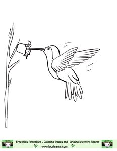 hummingbird coloring page - Coloring Pages For Printing