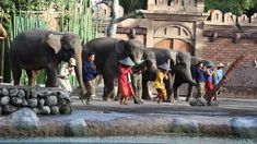 Bali Safari Marine Park Discount Tickets
