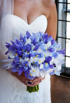 Irises!!!!! Image compliments of Michael Paul Photography www.michaelpaulphoto.com Bouquet by Karla Cassidy Designs www.karlacassidydesigns.com