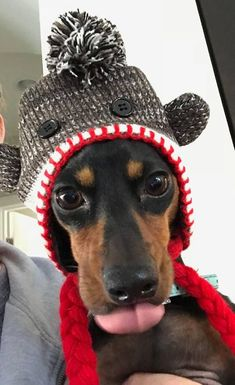 This is what Sophie thinks about her Sock Monkey Hat!! #dachshund