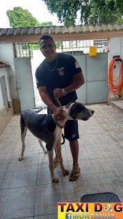 TAXI DOG MONTANHA TRANSPORTE DE ANIMAIS NO RIO DE JANEIRO: SOMO21/12/2015 -- Olha aí o nosso grande amigo Do...