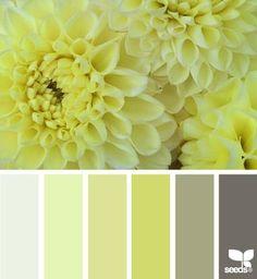 Dahlia hues