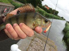 Baars vissen in de stad, altijd prijs!