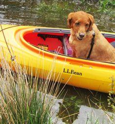 Let's go kayaking!