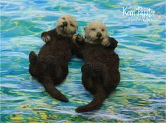 A pair of special request dollhouse miniature sea otters, hand-sculpted from polymer clay, delicate wire and dressed in furry, lifelike coats of natural alpaca fibers.