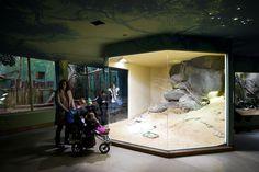 Feline and reptile pavilion - Praha Zoo Snake Terrarium, Aquarium Terrarium, Snake Enclosure, Tortoise Enclosure, Reptile House, Reptile Room, Animal Room, Animal House, Reptiles