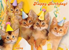 happy birthday wishes Happy Birthday Cute Baby Cats Birthday Song Happy Birthday Gif Images, Happy Birthday Music, Happy Birthday Greetings Friends, Happy Birthday Wishes Cake, Happy Birthday Celebration, Happy Birthday Messages, Baby Birthday, Happy Birthday With Cats, Happy Birthday Country