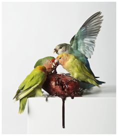 Myocardial Infraction – Polly Morgan 2013 Taxidermy, resin plaster, glue, oil paint, ink 127cm x 38cm x 38cm