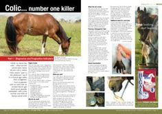 Colic... the number one killer - Part 1: Diagnostic and prognostic indicators