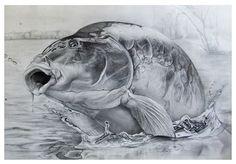 carp pencil drawing - Поиск в Google