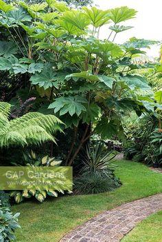 Lake Garden, Garden Cottage, Dream Garden, Tropical Backyard, Tropical Landscaping, Tropical Plants, Small Courtyard Gardens, Outdoor Gardens, Jardin Luxuriant