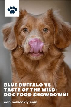 Taste of the Wild and Blue Buffalo are the two highest rated dog food brands. Read here to understand the important differences between the two, so you can make the best choice for your pet. Funny Dog Toys, Best Dog Toys, Large Breed Dog Food, Hypoallergenic Dog Breed, Dog Nutrition, Nutrition Guide, Dog Food Comparison, Top Dog Breeds, Make Dog Food