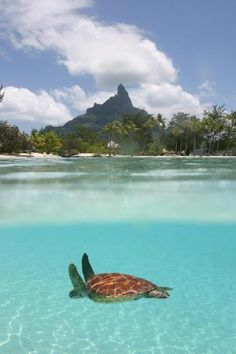tahitipromotion:  海亀 a ses turtle
