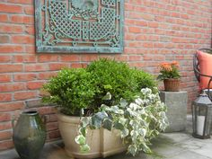 The French Tangerine: ~ boxwood and ivy