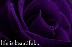 Life is Beautiful....