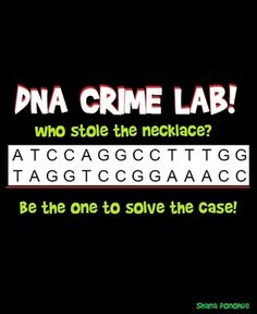 Each group is given a long paper strip of DNA, the story of the missing necklace and directions on how to fingerprint and sequence their DNA. Scissors act as the restriction enzyme, cutting the DNA between every CCGG into varied length segments. As the segments are pasted into the corresponding rows on the sequencing board (imitating gel electrophoresis), the DNA fingerprint of each suspect will emerge. So, who stole the necklace? Be a crime stopper!