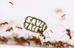 "Leafcutter ants protesting and waving placards with claimant messages such as ""Save Trees"", ""Ban the saw"", ""Fight"" or ""solidarity"", in protest to deforestation? A surreal scene imagined for the 50th anniversary of the WWF foundation, in a campaign entitled ""The Ant Rally"". An excellent campaign created by BBDO Dusseldorf agency."