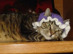 Leroy's     Kitty     Baby     Bonnet        For the furry infant                     in your life :)      Starlight here {right} is the...