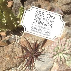 #PalmSprings Desert Garden Tour Sunday, April 12 from noon to 4pm link for details at TracyMerrigan.com Luv the haworthia.