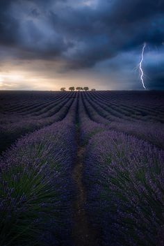 Profumo di lavanda world_shotz Photo by: Location: France Selected by : Photography Gallery, Fine Art Photography, Monuments, Portfolio Images, World Pictures, Landscape Photographers, Landscape Photos, Nature Photos, Cool Photos