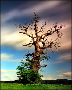 ღღღ  tree