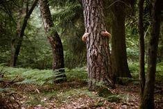 Energie stromů - vnímáte ji? | Sueneé Universe Universe, Plants, Outer Space, Planters, Cosmos, The Universe, Space, Plant, Planting