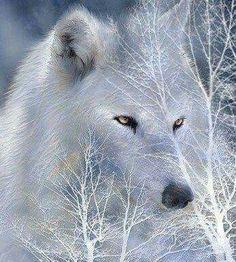 Wolf Symbolism, Beautiful Wolves, Wolf Howling, Lone Wolf, Mammals, Wildlife, Kitty, Artwork, Pride