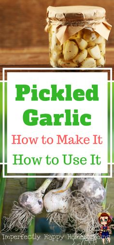 Pickled Garlic Recipe - how to make and use pickled garlic. Great health benefits too!