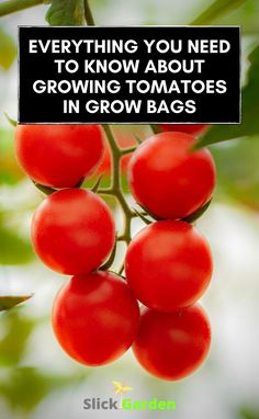 Everything You Need To Know About Growing Tomatoes In Grow Bags | Slick Garden. Nutrients: There is only a limited supply of nutrients available for the plant in the bag. Tomatoes plants are heavy feeders. So after running out of nutrients, we need to add some extra nutrients. Add some all-purpose vegetable feed in the soil. Varieties Of Tomatoes, Grow Tomatoes, Starting A Vegetable Garden, Grow Bags, Tomato Plants, Edible Garden, Balcony Garden, Growing Vegetables, Need To Know