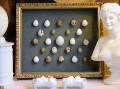 Bird Egg Shadow Box