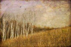 'Nature' by Jamie Heiden