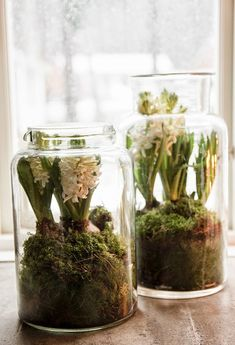Vintage House: hyacinths in glass jar Swedish Christmas, Cozy Christmas, White Christmas, Christmas Time, Xmas, Indoor Flowering Plants, Christmas Interiors, Garden Terrarium, Spring Bulbs