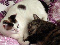 Leia und Gracy Katze | Pawshake