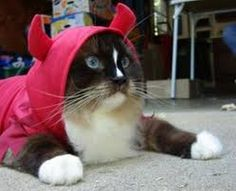 Pets in Halloween Costumes (09:11:46 AM, Sunday 23, October 2016 PDT) – 90 pics