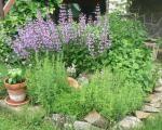 Bylinková záhrada Cake, Plants, Kuchen, Plant, Torte, Cookies, Cheeseburger Paradise Pie, Tart, Planets