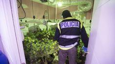 16 detenidos y 810 desenganches de luz en la primera fase del plan contra el cultivo de marihuana http://www.ideal.es/granada/201705/21/detenidos-desenganches-primera-fase-20170521105804.html?utm_campaign=crowdfire&utm_content=crowdfire&utm_medium=social&utm_source=pinterest